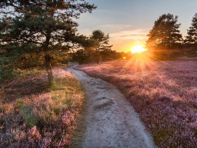 Duitsland - De Lüneburger Heide