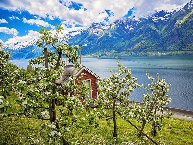 Noorwegen - Hardangerfjord