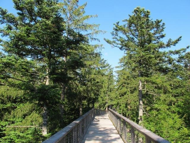 Duitsland - Gezelligheid in het Bayerische Wald - Boomtoppenpad