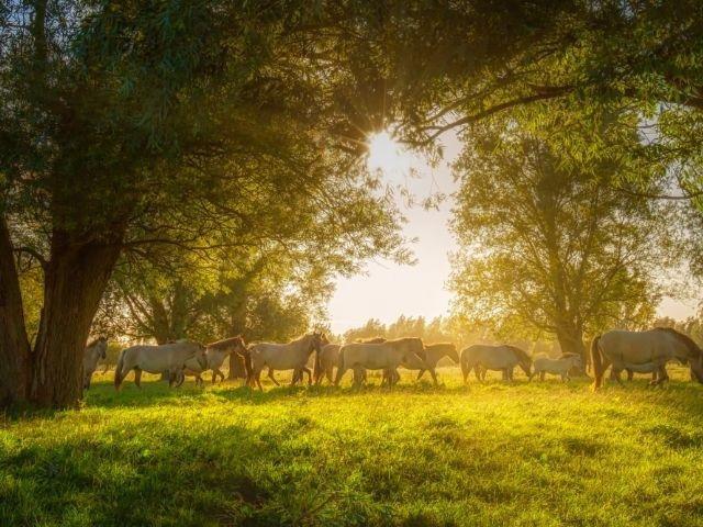 Lauwersmeer paarden