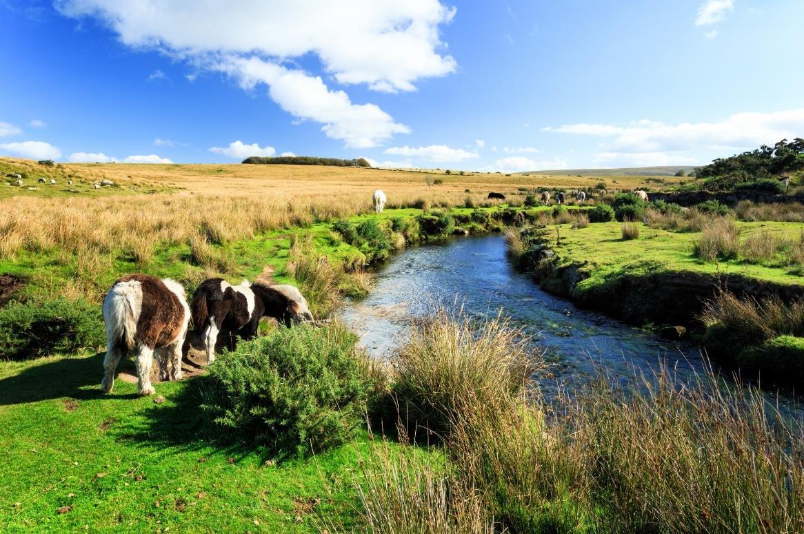 Dartmoor NP