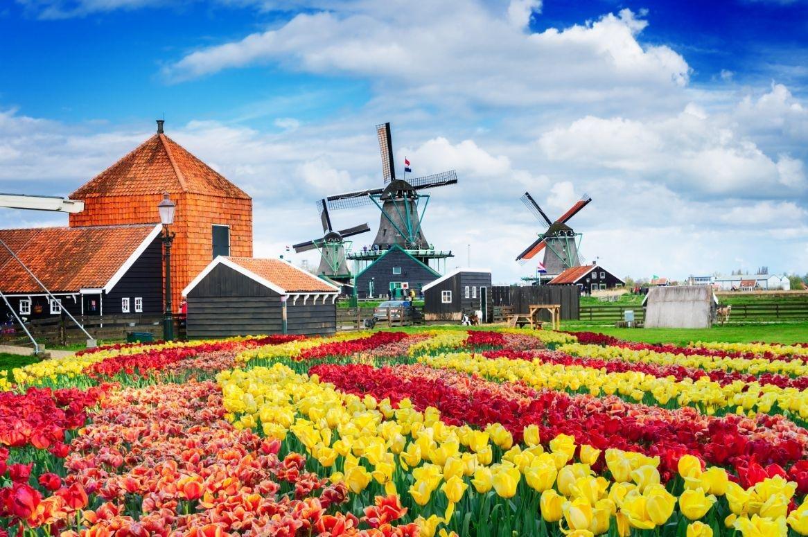 Lentecruise Oudhollandse steden & Tulpen